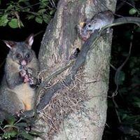 Pest Pro NZ LTD