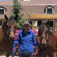 Victoria Dye Equestrian LLC