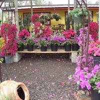 Sunshine Plants 4 Less / Pulaski Road Nursery