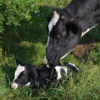 Crosby's River Valley Dairy