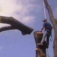 Active Tree Service
