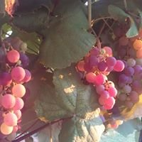 Vinkolet Winery