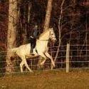 Willow Oak Farm Riding School