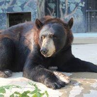 Bear Den Zoo & Petting Farm