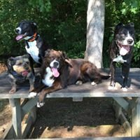 Greg's Dog Training and Pet Services