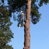 Floyd's Tree Service Inc.