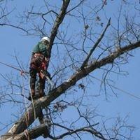 Haycock Tree Climber LLC.