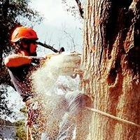 Roman's Tree Service
