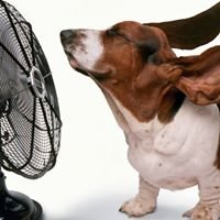 Shenandoah Air Conditioning & Heating