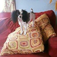 AHB Pet & Home Care
