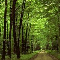Hidden Forest Studio