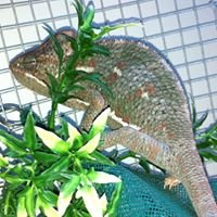 Edmonton Reptile Rehab & Rescue