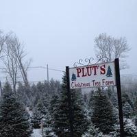 Pluts Christmas Tree Farm- Long Valley, NJ