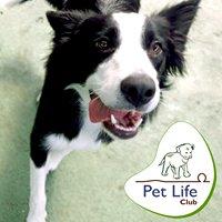 Pet Life Club -  Hotel e Creche para cães em Guarulhos