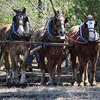 Abenaki Draft Horse Club