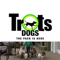 Trots Dog Walking and Training