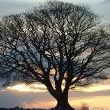 Branham Tree Service