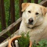 A Puppy's Prayer LLC - Mechanicsville, Va