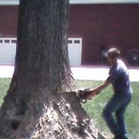 Williams Tree Trimming