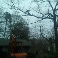 Wilkerson Tree Work and Stump Grinding