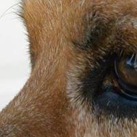 Good Doggy: Dog Training & Pet Sitting