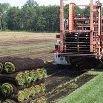 Ludema & Boyink Sod Farm