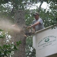 Dixie Tree Removal