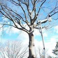 Treehuggers Expert Tree Care