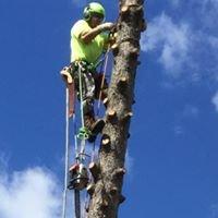Joshua Tree Removal LLC