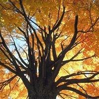Falkinburg Tree Expert Company