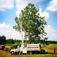 Coyer Tree service and stump removal