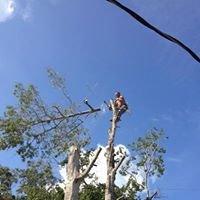 Danny Hudson's Tree Service