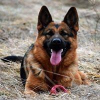 Kennel de Rossi - German Shepherd Dogs