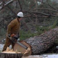 Eagle Logging, Inc.