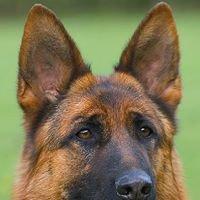Grundelhardt Kennels, breeders of Quality German Shepherd Dogs