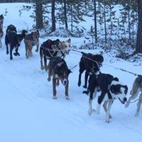 Gold Rush Run - Sled Dog Race