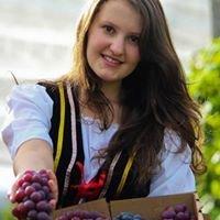 Festa da Uva e do Vinho de São Bento de Urânia