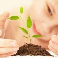 Viveiro Florestal Verde Brasil Mudas