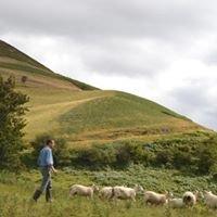 Clwydian Range Meats
