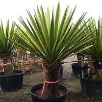 Walker's Palms and Exotic Plants
