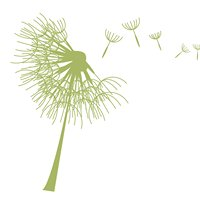 The Delicate Dandelion