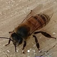 MI Bees & Beekeeping
