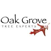 Oak Grove Tree Experts