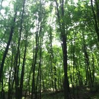 Kettle Moraine State Forest; Northern Unit