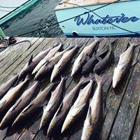 Whatever Sport Fishing