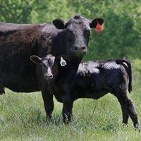 Fauquier Livestock Exchange, Inc.