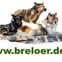 Hundeschule und Hundepension Nicole Breloer