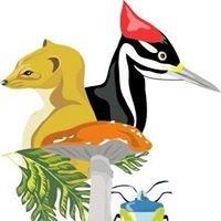 Safari Tours - Natur hautnah erleben