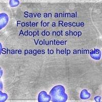 Sharing to Save Animals