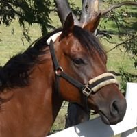 Sundown Lodge Equestrian